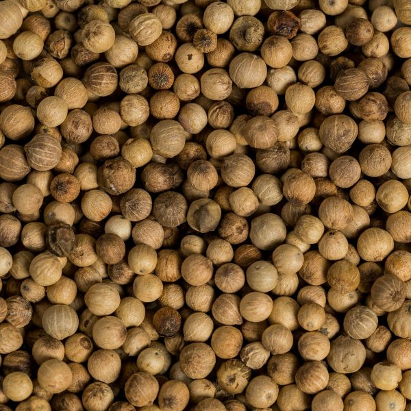 white peppercorns close up
