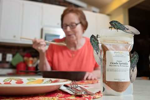 spice for cooking eating cicadas